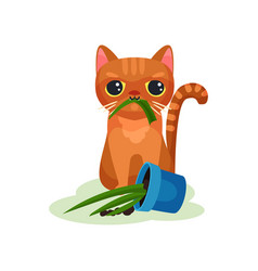 naughty kitten eating house plant mischievous vector image