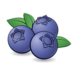 Blueberries 01 vector
