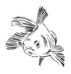 Hand sketch fish vector image