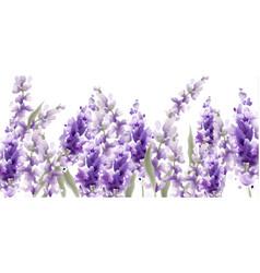 Lavender watercolor provence vintage retro decor vector