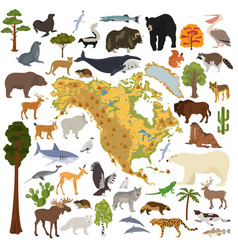 North america flora and fauna map flat elements vector