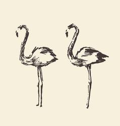 Flamingo hand drawn vector