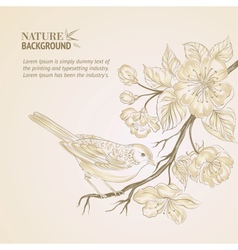 Hand drawn bird on sacura branch vector image