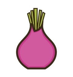 Purple beetroot vegetable vector