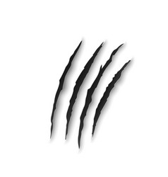 tiger claw marks scratches predator nails trail vector image
