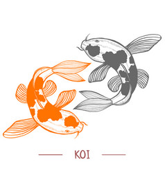 Karp koi in hand drawn style vector