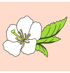 hand drawn cherry blossom vector image vector image