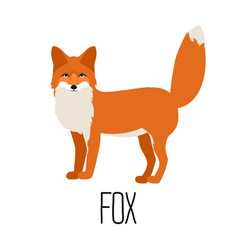 Cute cartoon fox isolated vector