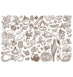 Fruit and vegetables monochrome sepia sketches big vector