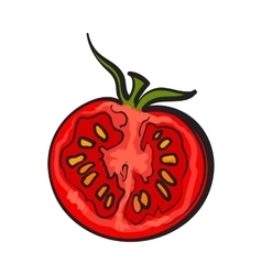 Sketch style drawing of ripe red half tomato vector image