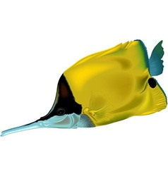 Butterflyfish vector image vector image