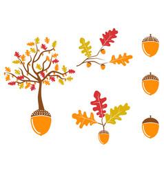 color oak acorn icons set vector image vector image