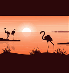 beauty landscape of flamingo at sunset silhouettes vector image vector image