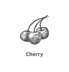 hand-drawn cherry vector image