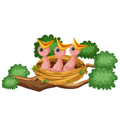 hungry chicks on nest vector image