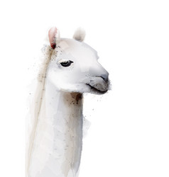 Lama watercolor isolated on white painted style vector