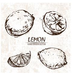 digital detailed lemon hand drawn vector image vector image