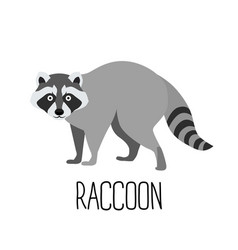 Cute cartoon raccoon vector
