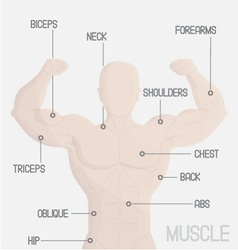 male part muscle gym vector image