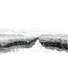 tea plantations ceylon sri lanka hand drawn vector image