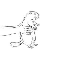 groundhog in hands coloring book vector image