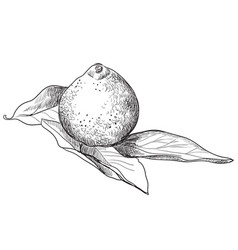 Hand drawing fruit-4 vector