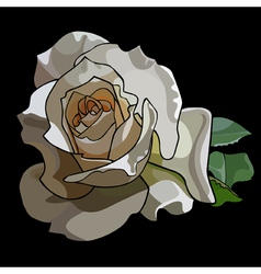 Large white rose on a black background vector