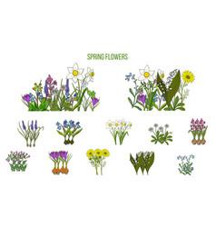 spring flowers set crocus scilla primula vector image