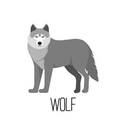 cute cartoon wolf isolated vector image vector image