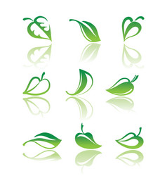 leaves of plants vector image vector image