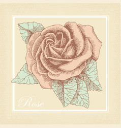 hand drawn rose in a retro style vector image