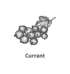 hand-drawn currant vector image