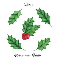 hand painted christmas holly mistletoe set vector image