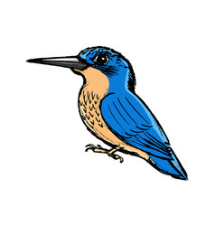 Kingfisher side view vector