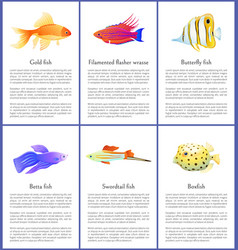 set marine and domestic fishes color banners vector image