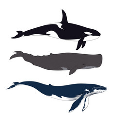 set of whales in simple realistic style vector image vector image
