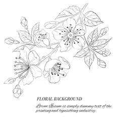 Scatch of spring sakura vector image