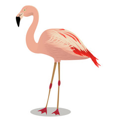 Chilean flamingo cartoon bird vector