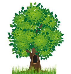 Deciduous tree vector