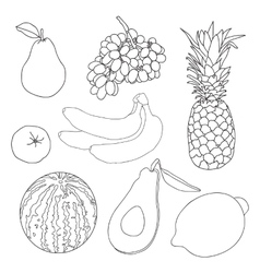 Fruits for coloring book vector