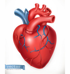 Human heart medicine internal organs 3d icon vector