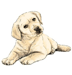 Labrador Retriever puppy 02 vector