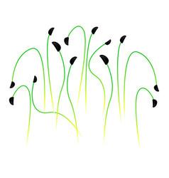 Microgreens scallions bunch plants white vector