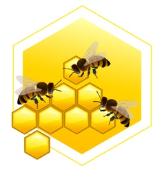 Honeycombs with bees vector image vector image