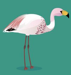 James s flamingo cartoon bird vector