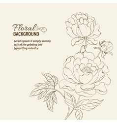 Peonies ink background vector