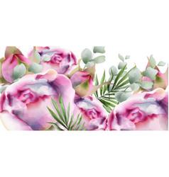 peonies watercolor summer exotic floral vector image