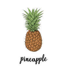pineapple fruit summer sketch vector image