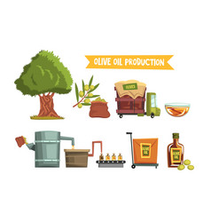 process of olive oil production from cultivation vector image