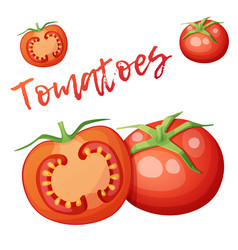 Whole and half tomato vegetable vector